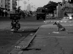 What was the dog thinking? Kharghar, Navi Mumbai